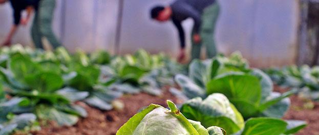 Técnico de Produção Agrária
