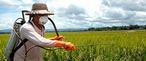 pesticidas 300X127
